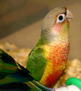 LIMITED TIME SALE ON  CONURES