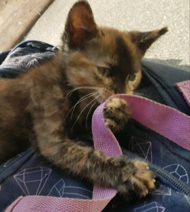 Giveaway kitten