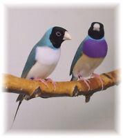 BIRD SHOW & SALE