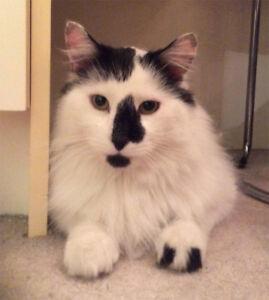 Cat boarding - Pension garderie pour chat