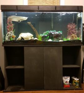 Full aquarium set-up