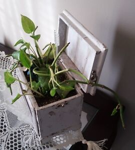 SOLID WOODEN PHOTO BOX PLANTER WITH LID London Ontario image 3