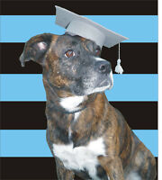 Dog Training Classes - Priceville