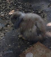 4 lovely rabbits left for sale