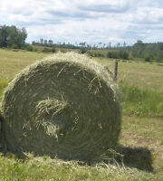 Hay 5x5 1200 lbs round bales
