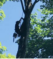 New Leaf Tree Care – Tree Trimming & Removal – Free Quote