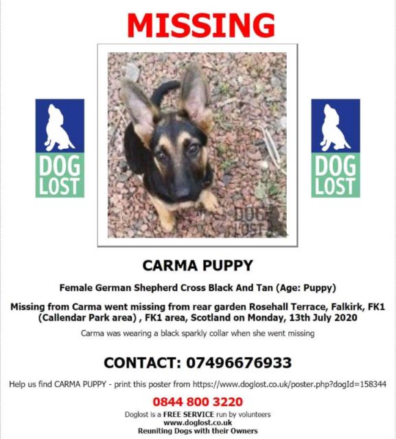 Missing Stolen German Shepherd Puppy In Polmont Falkirk Gumtree