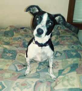 Forgotten souls Canada is looking for a home for Issac