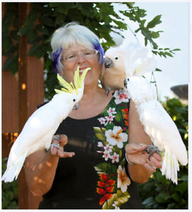 Parrot Owners Lower Mainland Vancouver