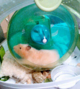 2 hamsters a donner