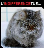 Vous voyez des chats errants à aider???