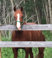 I am looking for a well broke horse