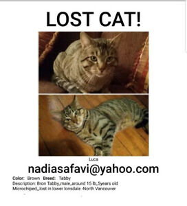 LOST CAT   -North Vancouver