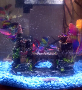 2.5 Aquarium Fish Tank Set Up: African Dwarf Frog+Minnow + Xtras