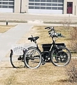Looking for an adult 3 wheeler bike