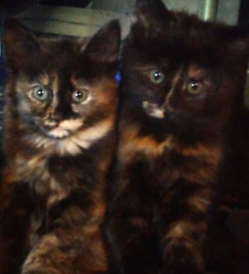 4 supers beaux chatons
