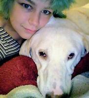 Dog sitter/ walker