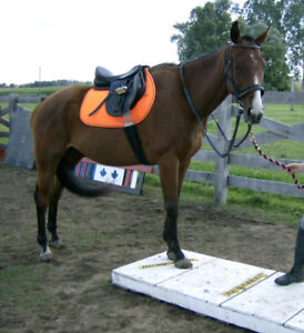 Western and English Riding Lessons