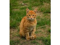 Stanmer park road ginger stray cat