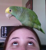 A Beginners Guide To Parrot Ownership