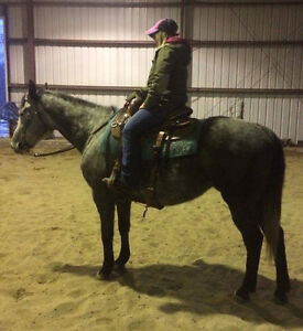 Seven Year Old Grey Mare