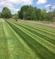 Commercial lawn maintenace and lanscape