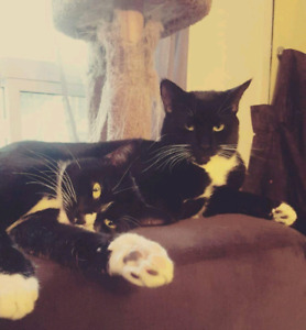 2 fixed, male cats free to a good home