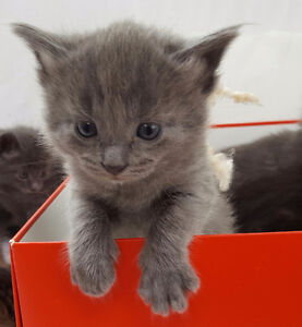 2 kittens ready rehome by May 20