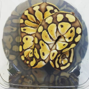 Snakes and Geckos @ Exotic Pets
