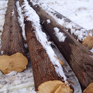 Standing timber and saw logs wanted