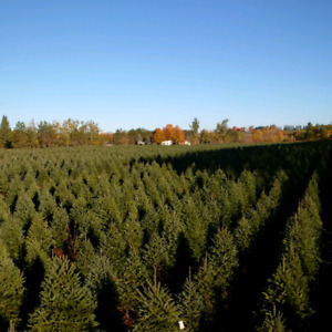 33 Acres House Trees Hobby Farm Country Living