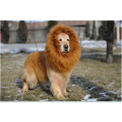Halloween Party Premium Lion Mane Costume for Pet Cat Dog Wig Clothes Cool LJ](Cool Guy Costumes Halloween)