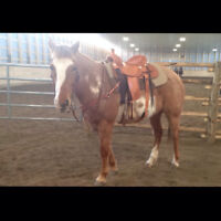 Strong, Stout, PFRA Working Mare