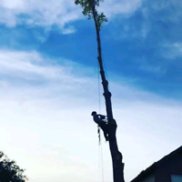 Tree Maintenance and Removals