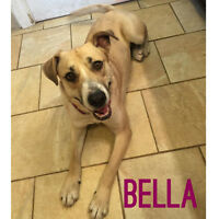 Bella is looking for her forever home! BoxerX