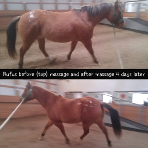 Equine Massage, WILLING TO TRAVEL !!