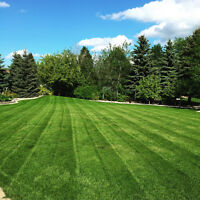 Weekly Lawn Maintenance, Fall Clean Up, Snow Removal & More
