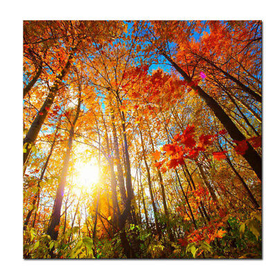 - Canvas Wall Art Print Photo Painting Picture Home Decor Landscape Forest 24x24