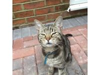 18months.old called cat cat also answers.to Tom. Last seen 20th dec 16 in freemantle very friendly