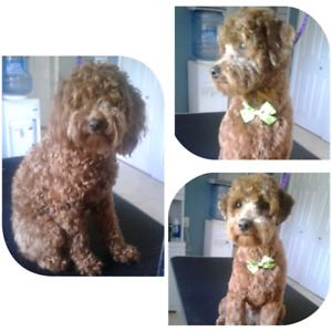 Loving Dog Groomer Accepting New Clients!!