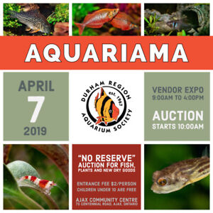 Aquariama 2019 - Durham Region Aquarium Society Auction