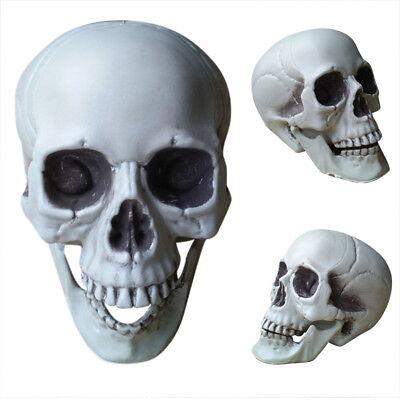Halloween Schädel Kopf Dekor Spielzeug Kaffee Bars Hause - Halloween Dekor