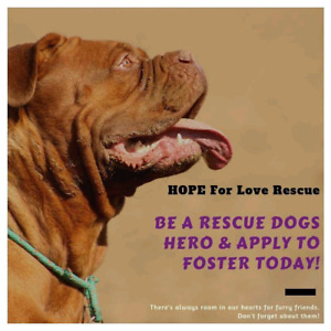 LOVING FOSTERS NEEDED!