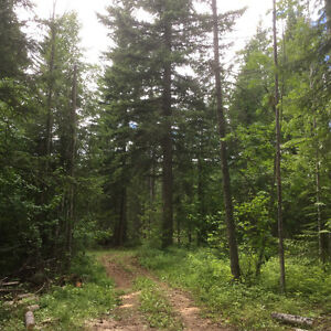 20 acres near Salmon Arm