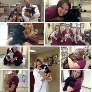 Come FEEL the Difference! Princess & Downtown Animal Hospital