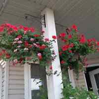 Hanging flower plants - reduced