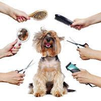Looking for experienced Dog Groomer for well established kennel