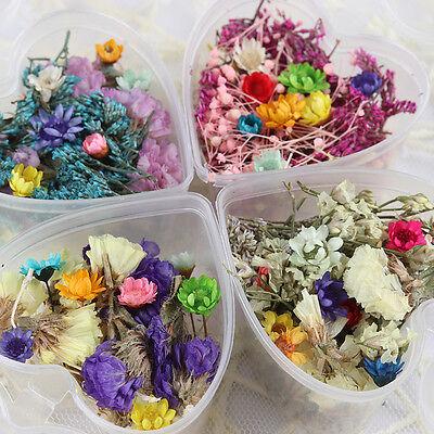 Nagel Dekoration Farbig Trocken Blumen mit Box Nail Design ()