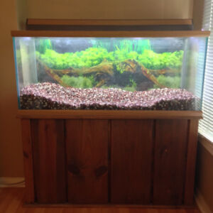 Fish Tank with Solid Wood Stand 90 Gallon