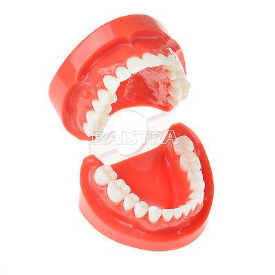 Dental Adult Teeth Model Typodont Demonstration Standard Teach Study Azdent